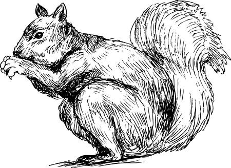 acorn squirrel: hand drawn squirrel