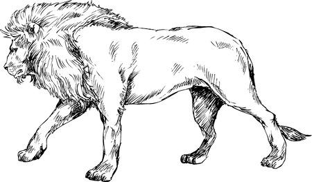lion dessin: lion tiré par la main Illustration