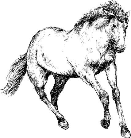 horse drawn: hand drawn horse