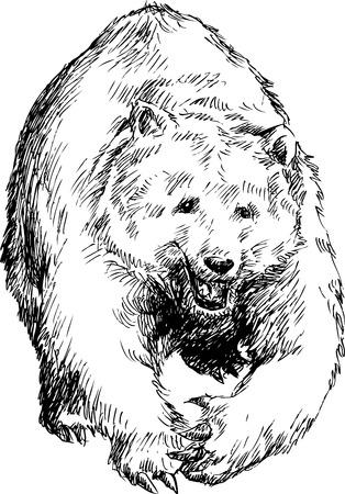 hand drawn bear Stock Vector - 27324689