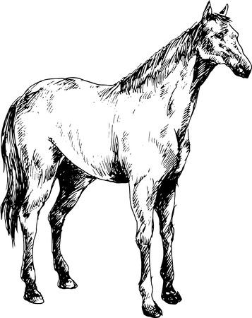 nostrils: hand drawn horse