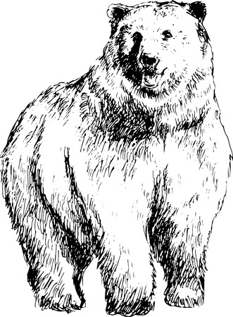 hand drawn bear Vector