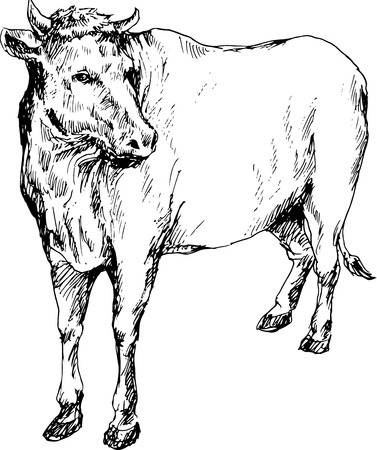 holstein cow: hand drawn cow