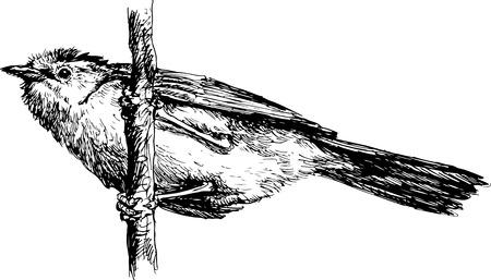 dignity: hand drawn bird