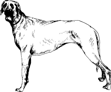 short haired: hand drawn dog