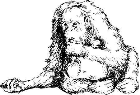 hominid: hand drawn orangutan