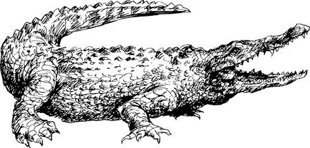 gator: hand drawn crocodile