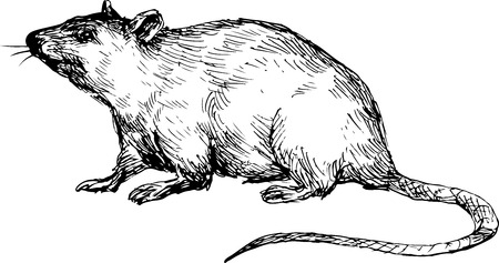 mouse: hand drawn mouse