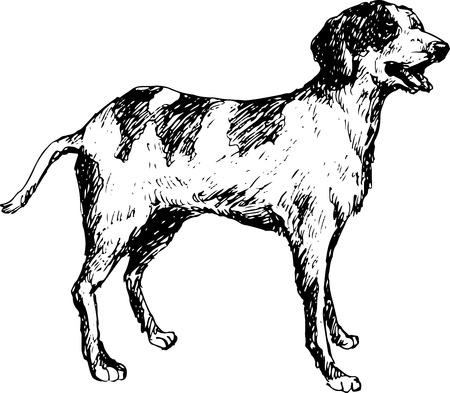 short haired: hand drawn dog Illustration