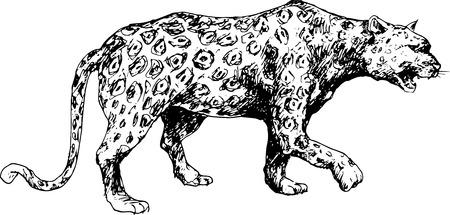 tigre bebe: guepardo dibujado a mano