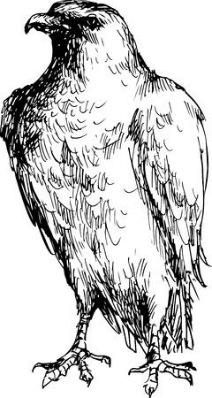 bald eagle: hand drawn eagle
