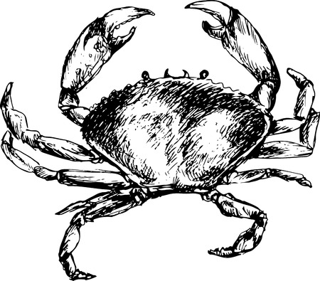 hand drawn crab Illustration
