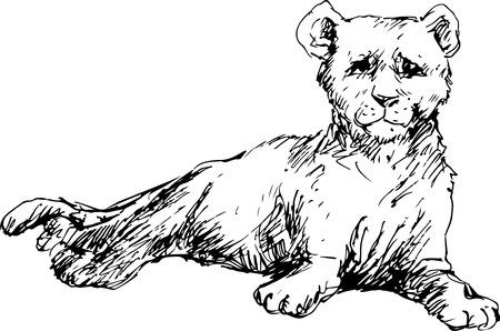 felidae: hand drawn baby cougar