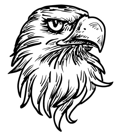hand drawn eagle head Vettoriali
