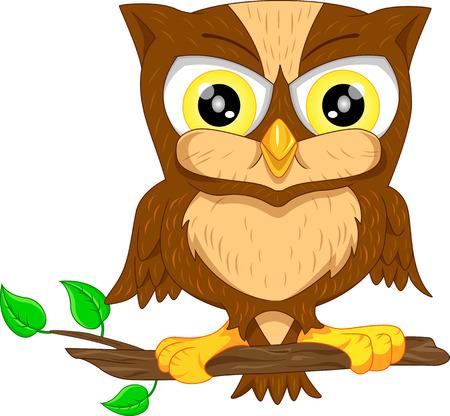 birds cartoon: cute owl cartoon Illustration