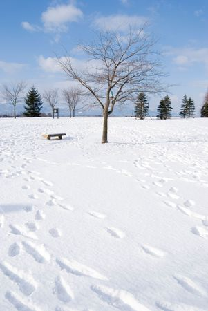 honshu: Footprint in the snow, bald tree and vacant chair,  Hokkaido, north of Honshu, Japan,  northeast Asia