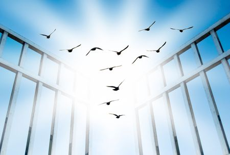 fly for freedom, overcome the difficult gate