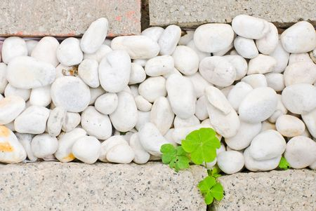 white pebble with green leaf in garden Stock Photo - 5260456