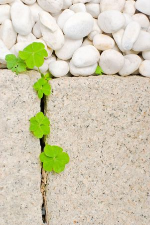 white pebble and newborn creeping oxalis leaf in Japanese garden Stock Photo - 5492520