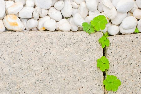 white pebble and newborn creeping oxalis leaf in Japanese garden photo