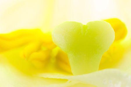 pistil: interior of white lily flower, detail of pistil and stamen