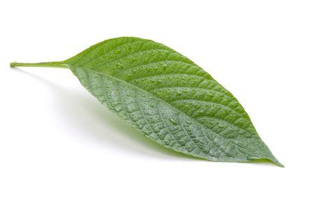 녹색 잎 자연 개념 흰색 배경에 고립 스톡 콘텐츠