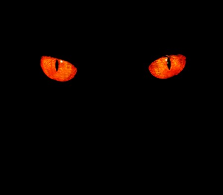 halloween eyeball: Serious, evil animal eyes stare at something in black,