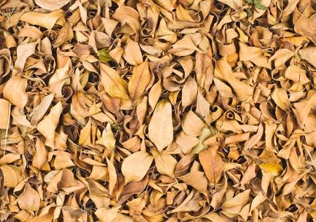 Fallen leaves in winter, full of dry leaves on ground. photo