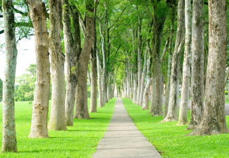 ways: Little road through row of trees Stock Photo
