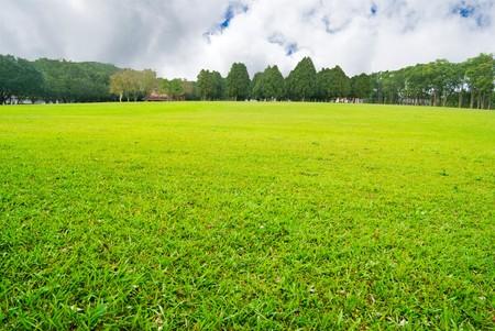 messze: Soft GGreen plain with trees far away