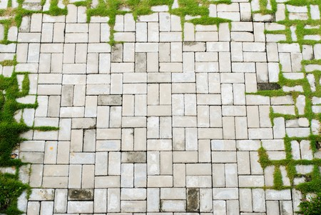 aged brick sidewalk with grass as frame photo