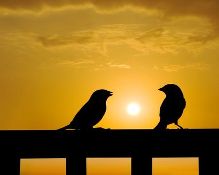 Admonish concept, sparrow small talk under sunset Stock Photo - 7824689