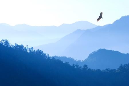 adler silhouette: Berg im Morgennebel