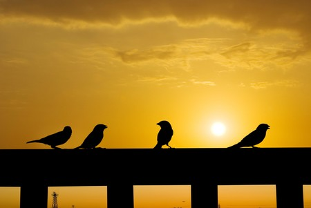 Sparrow playing under senset on the fence. city skyline as background. Stock Photo - 7957534