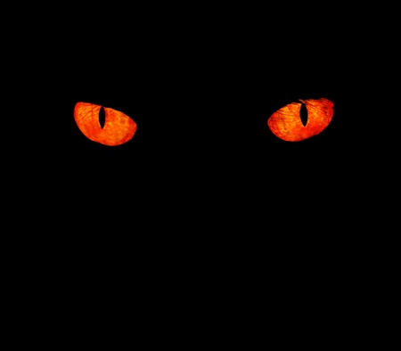 Serious, evil animal eyes stare at something in black,  photo