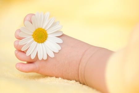 Lovely infant foot with little white daisy Stock Photo - 8865459