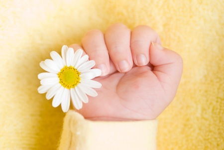infant hand: Lovely infant hand with little white daisy Stock Photo