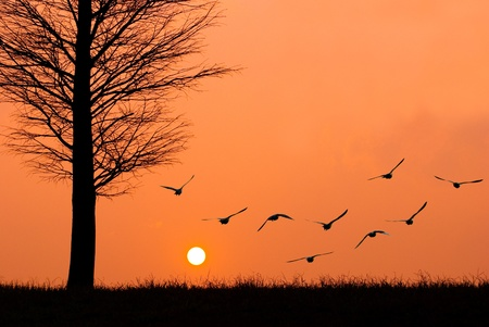 Birds fly to the sun. sunset in a peaceful evening. photo