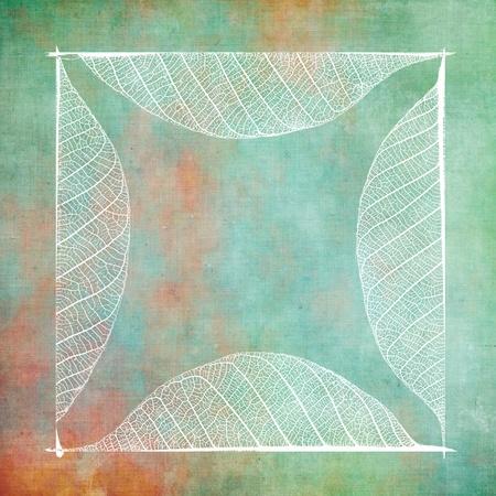 Square frame on grunge background, real leaf detail vein. photo