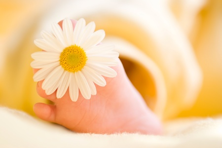 three months old: Lovely infant foot with little white daisy on it. The baby is three months old.