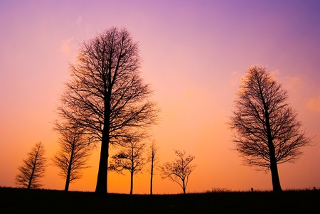 Trees in peaceful winter evening, after sunset photo