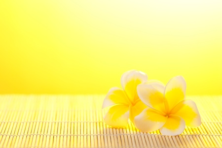 leelawadee: Leelawadee flower on bamboo background under warm sunshine