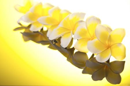 leelawadee: Series yellow Leelawadee flowers under warm sunshine