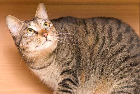 'hide out': Tabby cat hide in the wooden box and look out Stock Photo