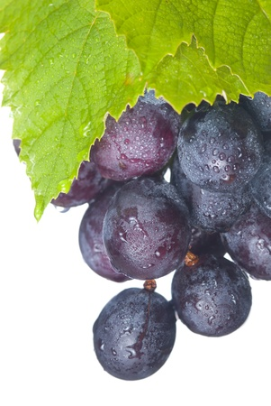 black berry: Fresh grapes with drops and green leaf