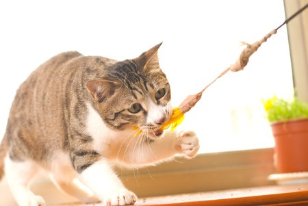 Cat is playing photo