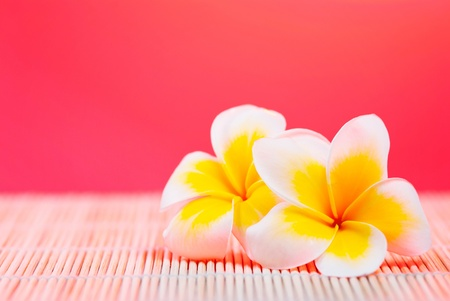leelawadee: Leelawadee flowers on bamboo texture under red background
