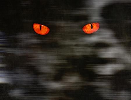 Animal eyes stare at something from  dark wall