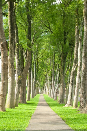 Little road through row of trees. Natural concept. photo