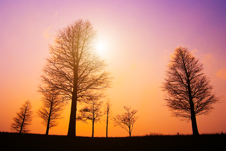 cloudless: Trees in peaceful winter evening, after sunset